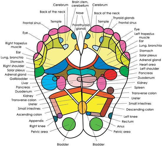 A typical foot reflexology chart